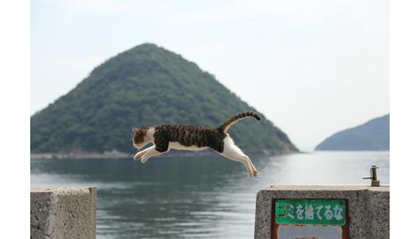 猫展 Vol.7