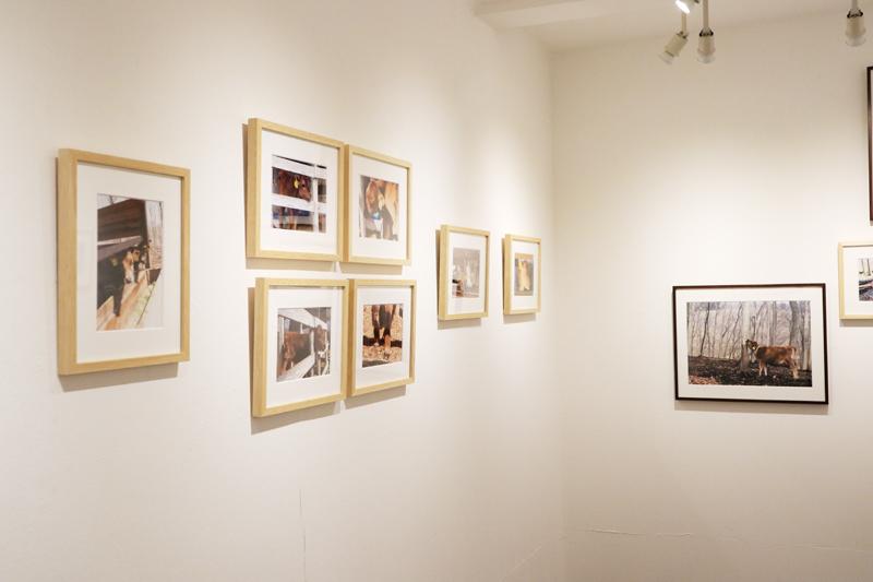 イノウエヨウコ写真展「森林ノ牧場のLes Mignonnes」始まりました。