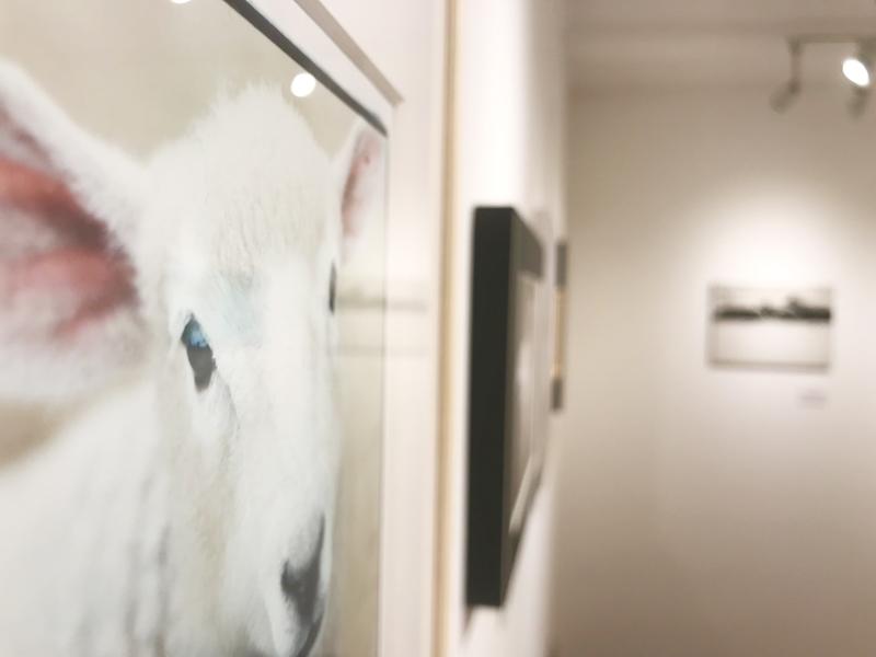 「わくわく動物展」始まりました