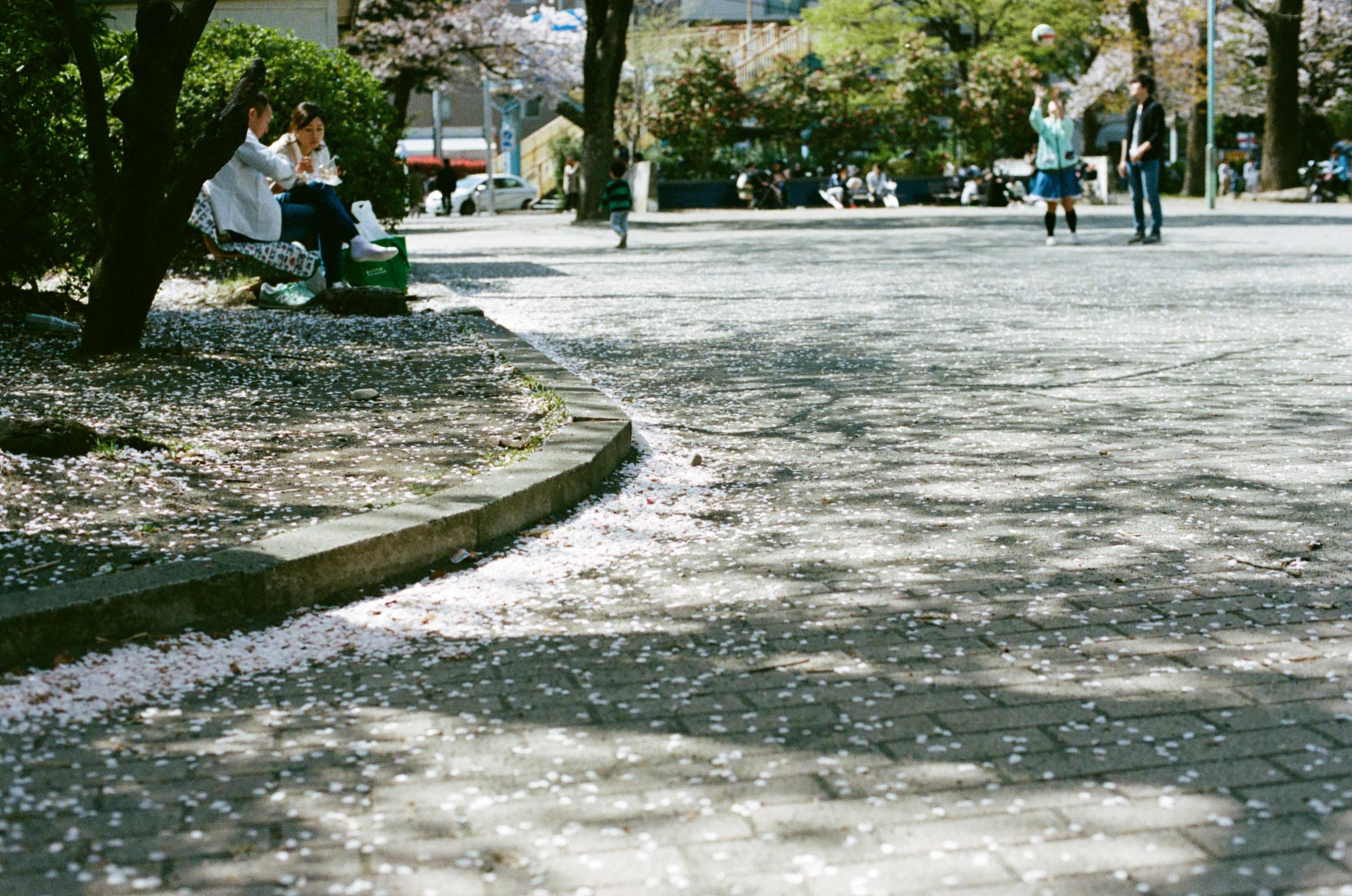 【スタッフコラム】ナナメな写真 〜春はきらい〜